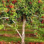 Как определить каких элементов питания дереву не хватает?