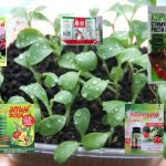 Три лучших стимулятора роста для комнатных растений
