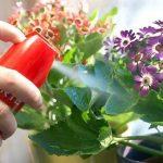 Как обезопасить комнатные растения от вредителей?