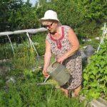 Спецпроект: огород без вредителей