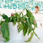 Болезни комнатных растений: виды и лечение